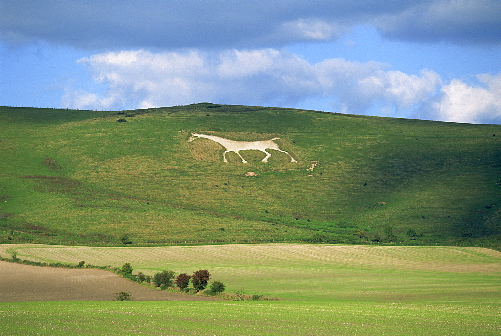 White horse dating from 1812 carved in chalk on Milk Hill, Marlborough Downs, overlooking Vale of Pewsey, Wiltshire, England, United Kingdom, Europe