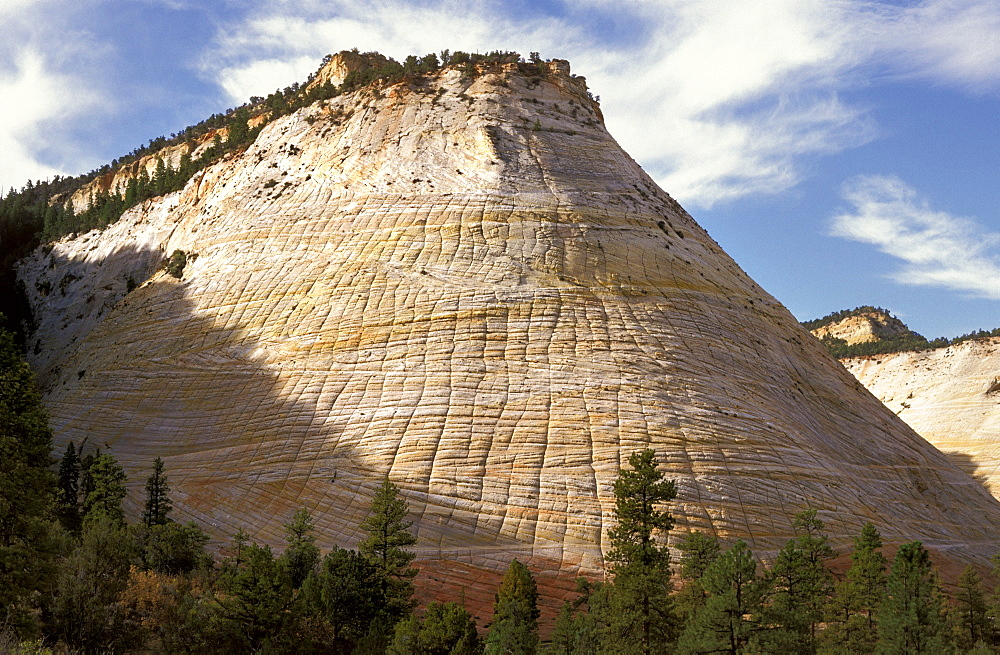 The unusually eroded sandstone of Checkerboard Mesa in the 'sliprock country' landscape by the Zion-M.Carmel highway in the South Eeast of this stunning national park,  Zion National Park, Utah, Usa