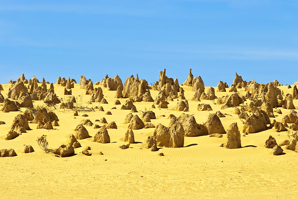 Rock pillars formed by erosion of thick hard layer of calcrete over soft limestone, The Pinnacles Desert, Nambung National Park, near Cervantes, Dandaragan Shire, Western Australia, Australia, Pacific