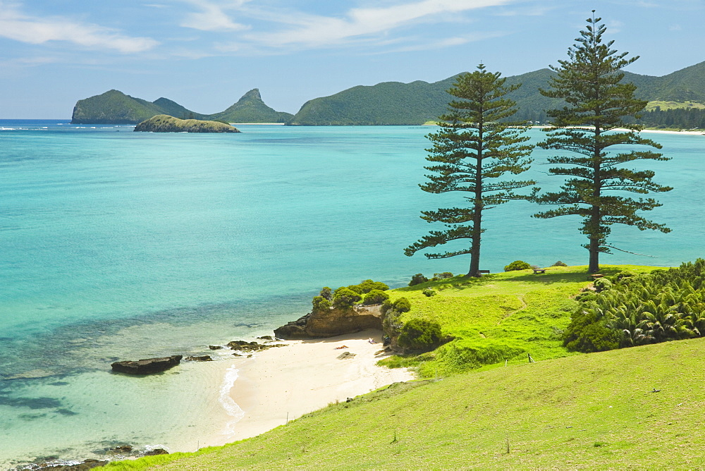 Looking north to Lover's Bay with two Norfolk Island pines by the lagoon with the world's most southerly coral reef, on this 10km long ancient volcanic island in the Tasman Sea, Lord Howe Island, UNESCO World Heritage Site, New South Wales, Australia, Pacific