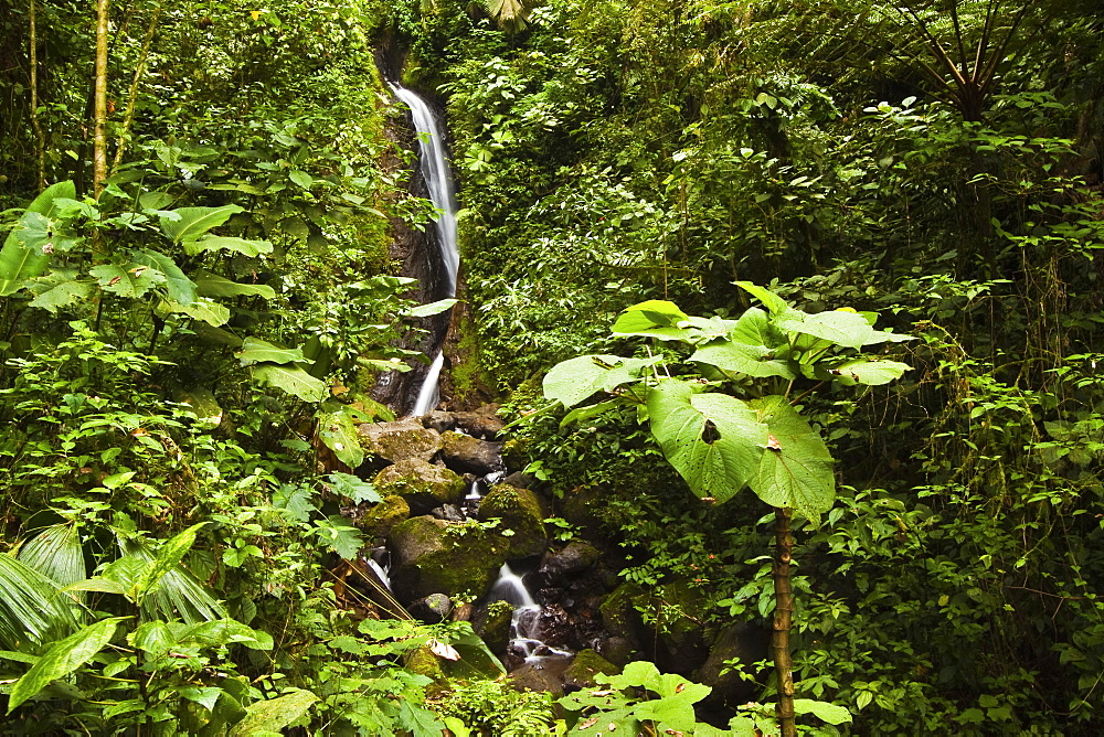 Waterfall at Arenal Hanging Bridges where the rainforest is accessible via walkways, La Fortuna, Alajuela Province, Costa Rica, Central America