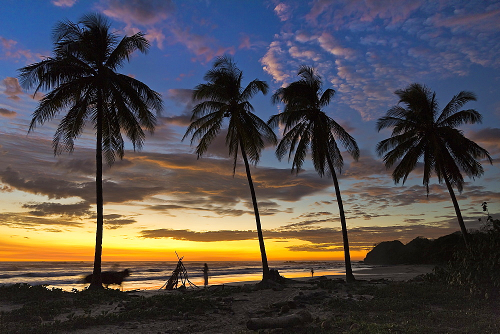 Palm trees at sunset on Playa Guiones surfing beach, Nosara, Nicoya Peninsula, Guanacaste Province, Costa Rica, Central America