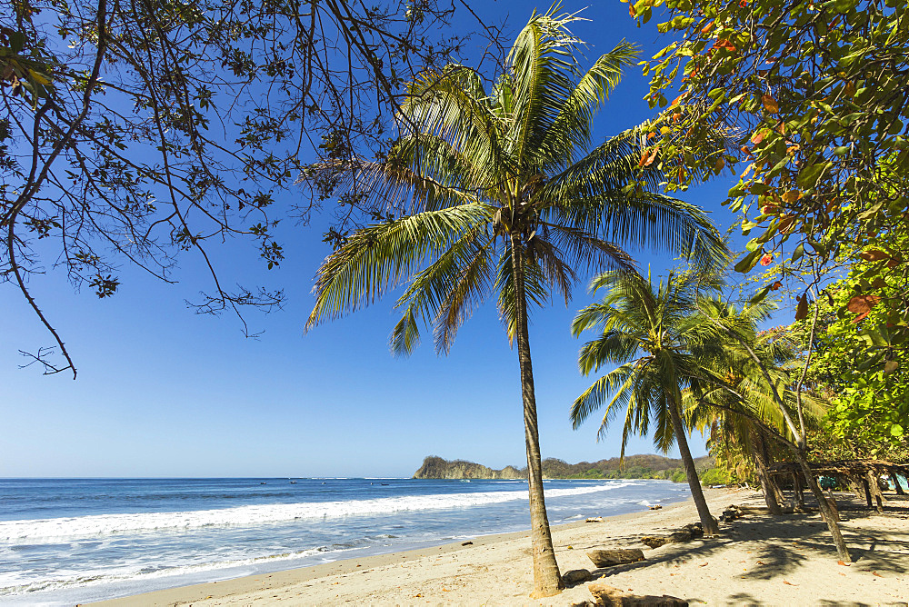 The white sand palm-fringed beach at this laid-back village and resort, Samara, Nicoya Peninsula, Guanacaste Province, Costa Rica, Central America
