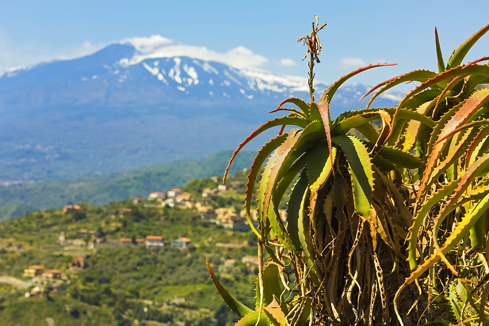 Agave succulent plant and active volcano 3350m Mount Etna seen at this northeast tourist town, Taormina, Catania Province, Sicily, Italy, Mediterranean, Europe