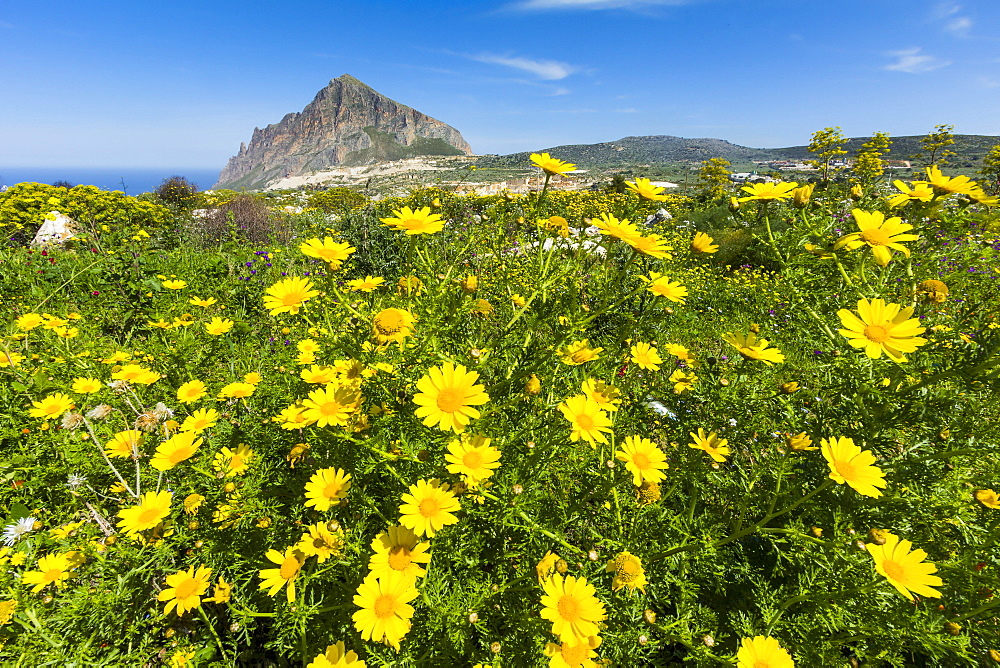 Spring flowers and 659m limestone Monte Cefano, a Nature Reserve and hiking and climbing spot northeast of Trapani, Custonaci, Sicily, Italy, Mediterranean, Europe