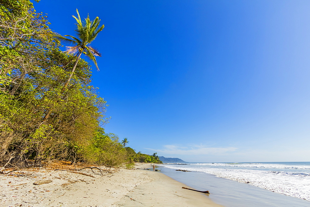 Tall palms and jungle behind the beach at this popular southern Nicoya Peninsula surf resort, Santa Teresa, Puntarenas, Costa Rica, Central America