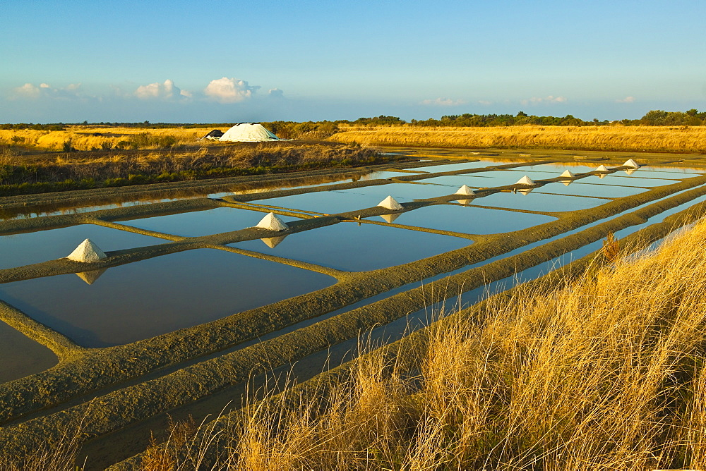 Salt pans and piles of Fleur de Sel around the Fier d'Ars marshes of the west, Ars en Re, Ile de Re, Charente-Maritime, France, Europe - 83-12958