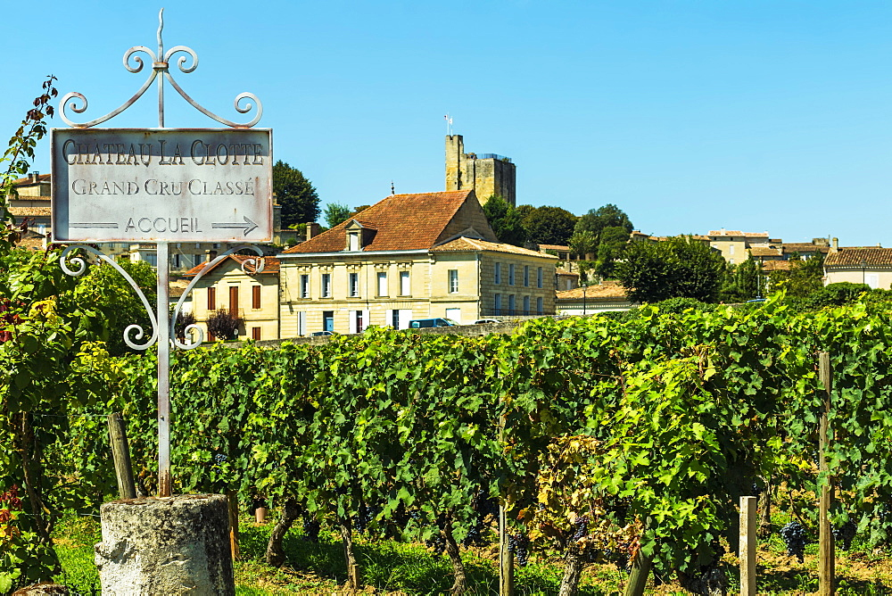Grand Cru vineyard of Chateau La Clotte in this historic town & famous Bordeaux red wine region. Saint Émilion; Gironde; France