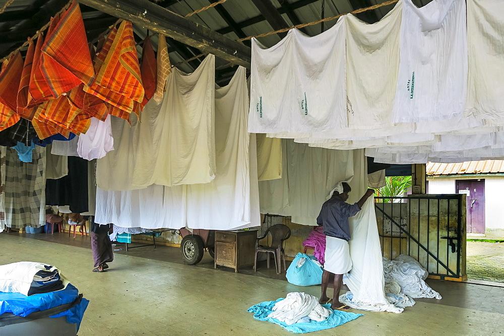 Man in lungi hanging sheets to dry at the Dhobi Khana, a rare old Tamil hand wash laundry; Veli, Kochi (Cochin), Kerala, India