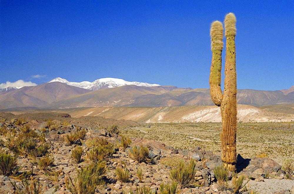 Atacama Desert, San Pedro de Atacama region with Andes on the horizon, Chile, South America