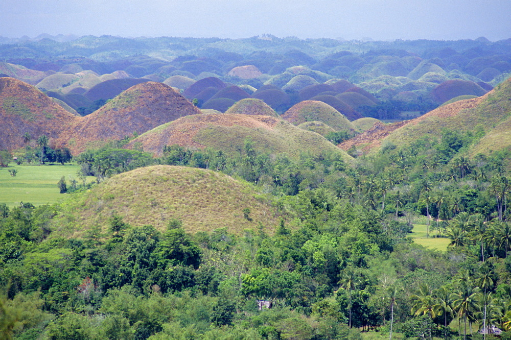 The Chocolate Hills of Bohol, famous geological curiosity, of which there are over 1000, Bohol, Philippines, Southeast Asia, Asia