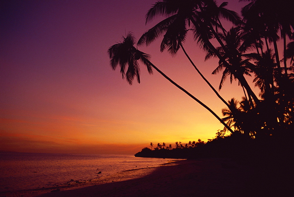 Palm trees on Alona Beach silhouetted at sunset on the island of Panglao, off the coast of Bohol, the Philippines, Southeast Asia, Asia