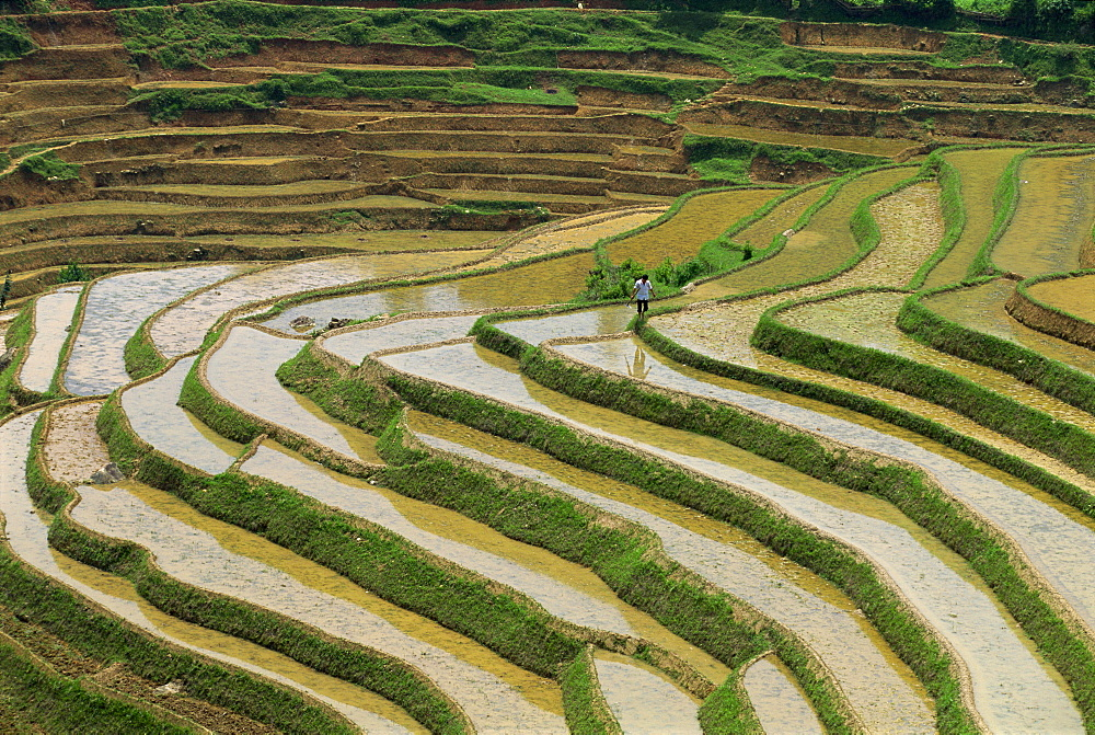 Farmer in terraced rice paddies at Longsheng in north east Guangxi, China, Asia