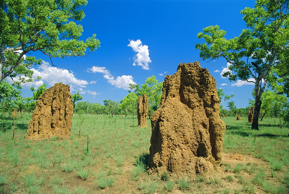 Termite mounds, Kakadu National Park, Northern Territories, Australia