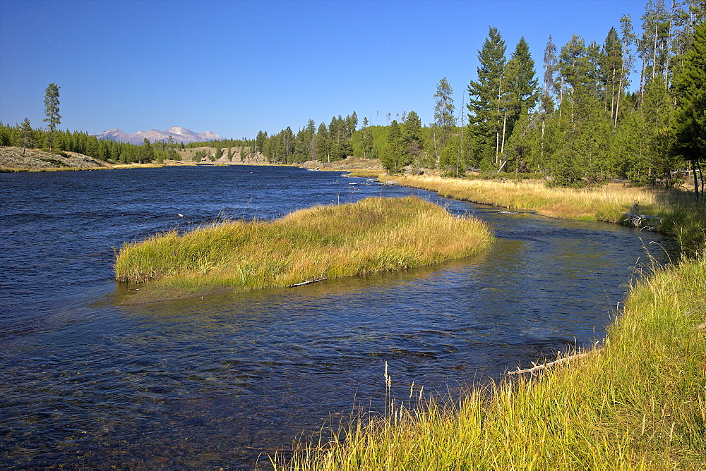 Madison River valley near Madison, Yellowstone National Park, UNESCO World Heritage Site, Wyoming, United States of America, North America