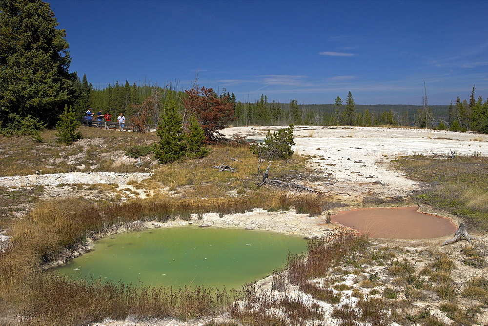 Thumb paint pots, West Thumb Geyser Basin, Yellowstone National Park, UNESCO World Heritage Site, Wyoming, United States of America, North America