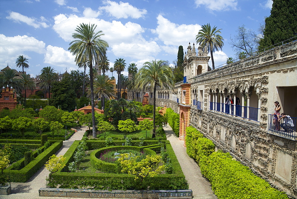 Courtyard gardens, Alcazar, UNESCO World Heritage Site, Seville, Andalucia, Spain, Europe - 831-1476