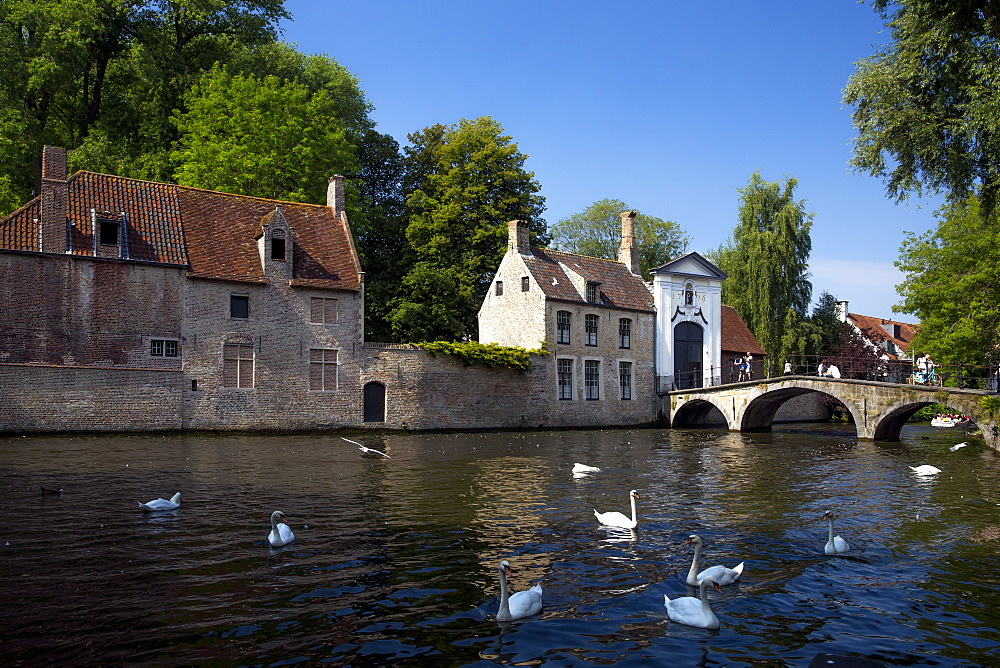 Mute swans (Cygnus olor), at the Minnewater Lake and Begijnhof Bridge with entrance to Beguinage, Bruges, Belgium, Europe - 831-1526