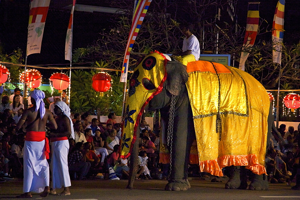 Ceremonial elephant in the Navam Maha Perahera, Colombo, Sri Lanka, Asia