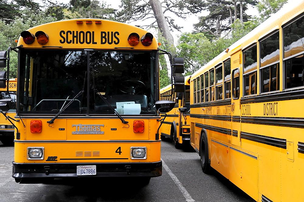 School buses at the Japanese Tea Garden, San Francisco, California, USA, North America