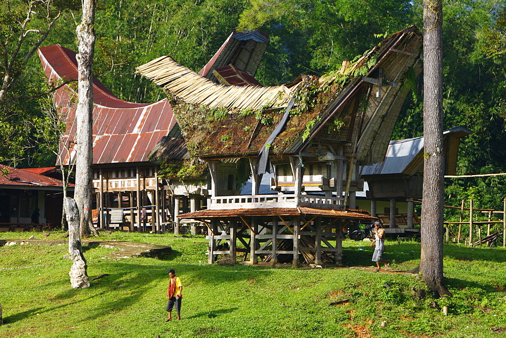 Typical Toraja house, Kete Kesu, Toraja culture, Sulawesi, Indonesia, Asia