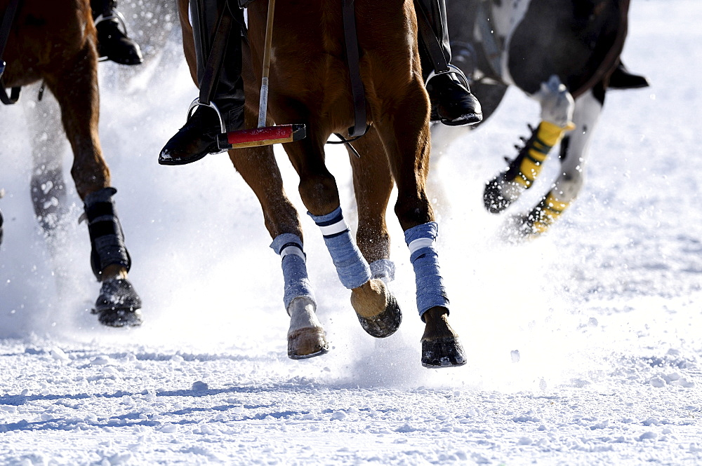 Polo players battling for the ball, polo horses galloping across the snow, Snow Arena Polo World Cup 2010 polo tournament, Kitzbuehel, Tyrol, Austria, Europe