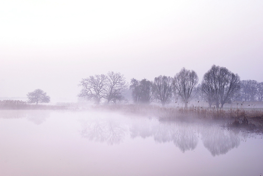 Tree silhouettes on a lake in morning fog at sunrise, Biosphaerenreservat Mittlere Elbe biosphere reserve, Saxony-Anhalt, Germany, Europe