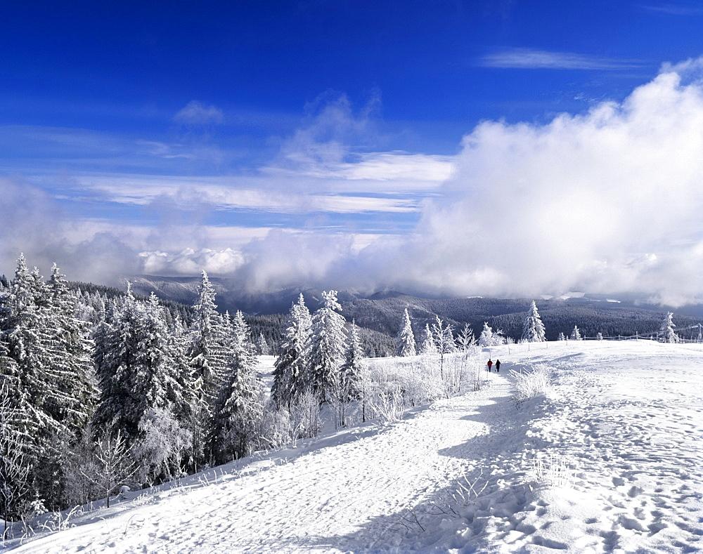 Winter landscape, Mt. Kandel, Black Forest, Baden-Wuerttemberg, Germany, Europe