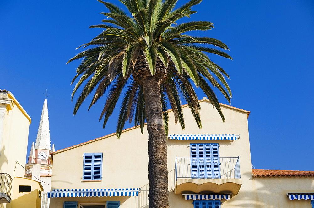 Balcony with palm, Calvi, Balagne, Corsica, France, Europe