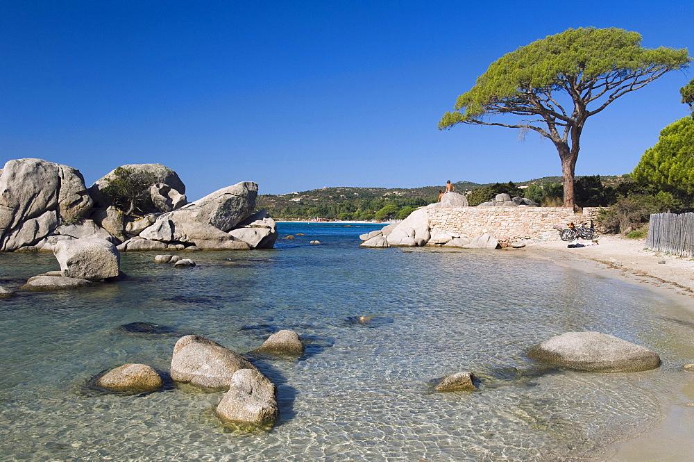 Pine tree on the beach, Bay of Palombaggia, East Coast, Corsica, France, Europe