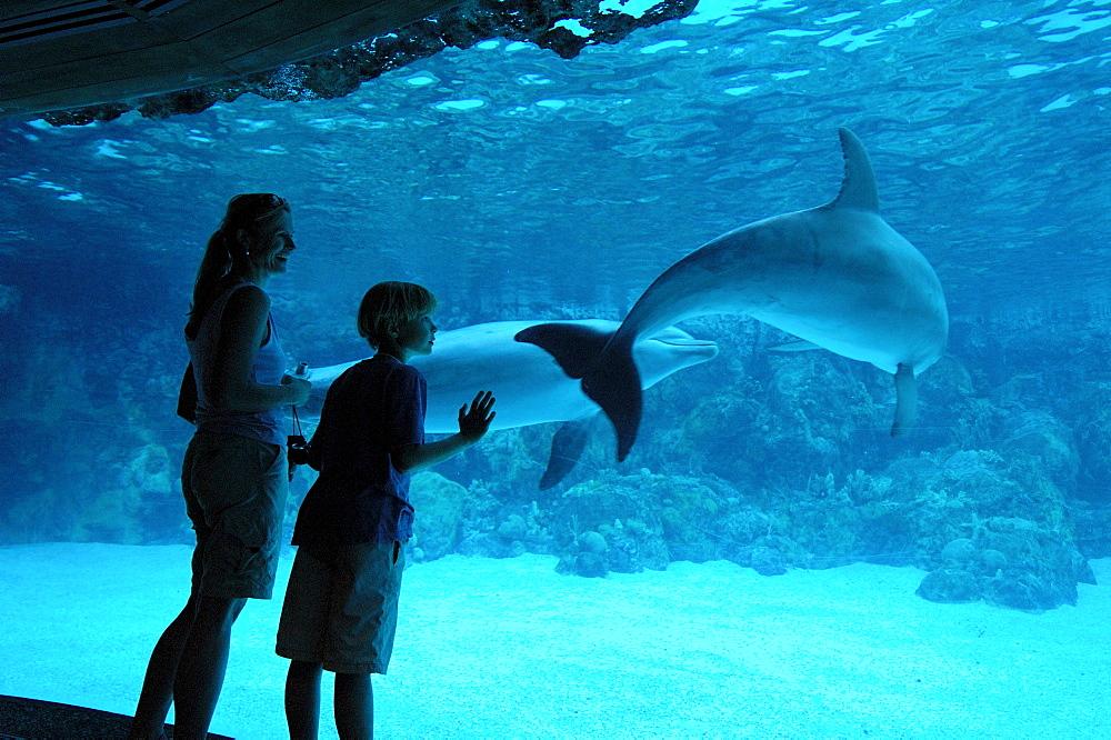 Dolphines, SeaWorld Adventure Park, Orlando, Florida, USA, North America