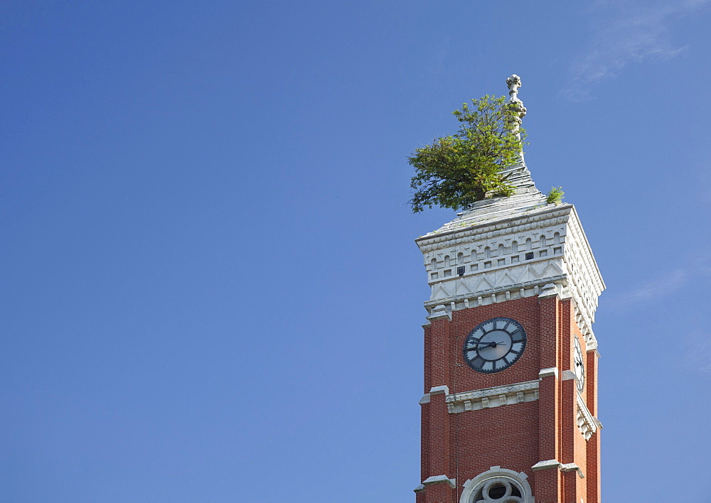 A Mulberry tree grows from the roof of a clock tower on the Decatur County Courthouse, Greensburg, Indiana, USA
