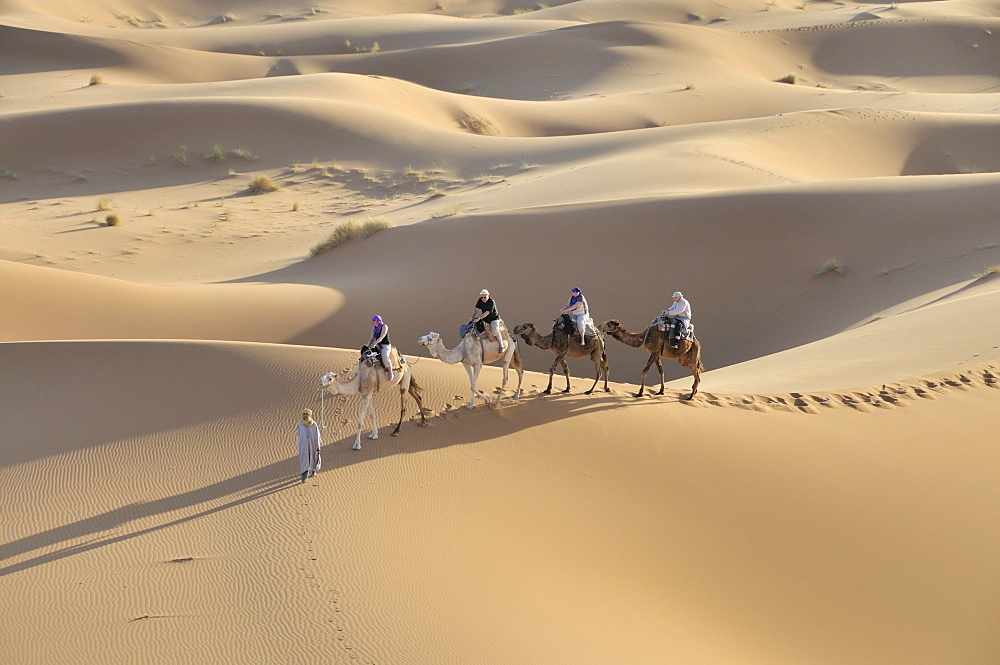 Camel trekking, Erg Chebbi, Morocco, Africa