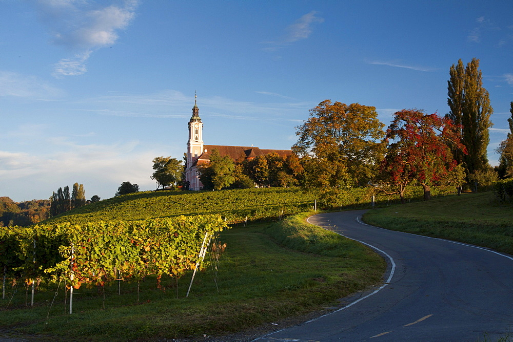 The pilgrimage church Birnau on Lake Constance at dawn surrounded by vineyards, Bodenseekreis district, Baden-Wuerttemberg, Germany, Europe