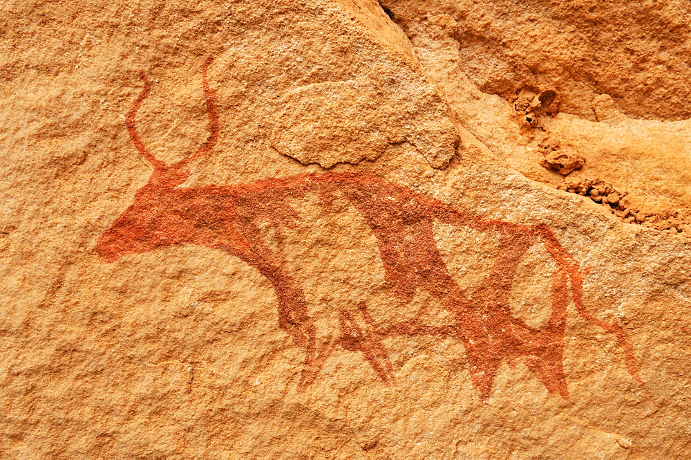 Painted cow, neolithic rock art of the Tadrart, Tassili n'Ajjer National Park, Unesco World Heritage Site, Algeria, Sahara, North Africa
