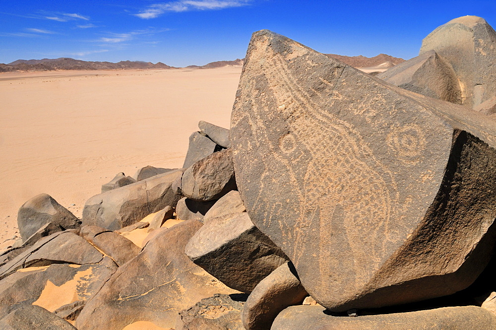 Neolithic rock art, giraffe engraving, of the Tadrart, Tassili n'Ajjer National Park, Unesco World Heritage Site, Algeria, Sahara, North Africa
