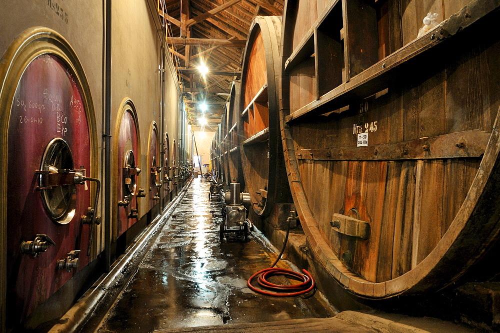 Oak barrels and modern tanks for wine production in the Bodega La Rural winery, Maipu, Mendoza Province, Argentina, South America