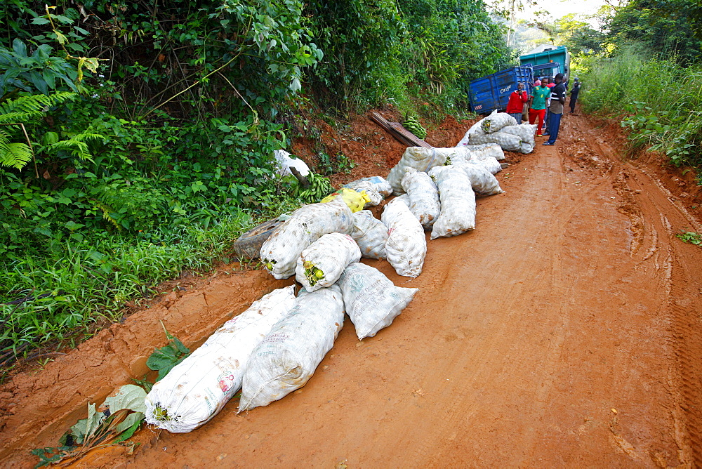 Load from a truck stuck in the mud, jungle trail, Bamenda, Cameroon, Africa