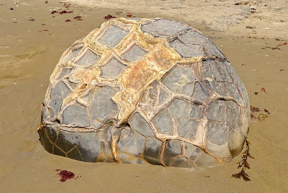 Boulder with a structured surface on a sandy beach, Moeraki Boulders, a geological rock formation, Moeraki, East Coast, South Island, New Zealand