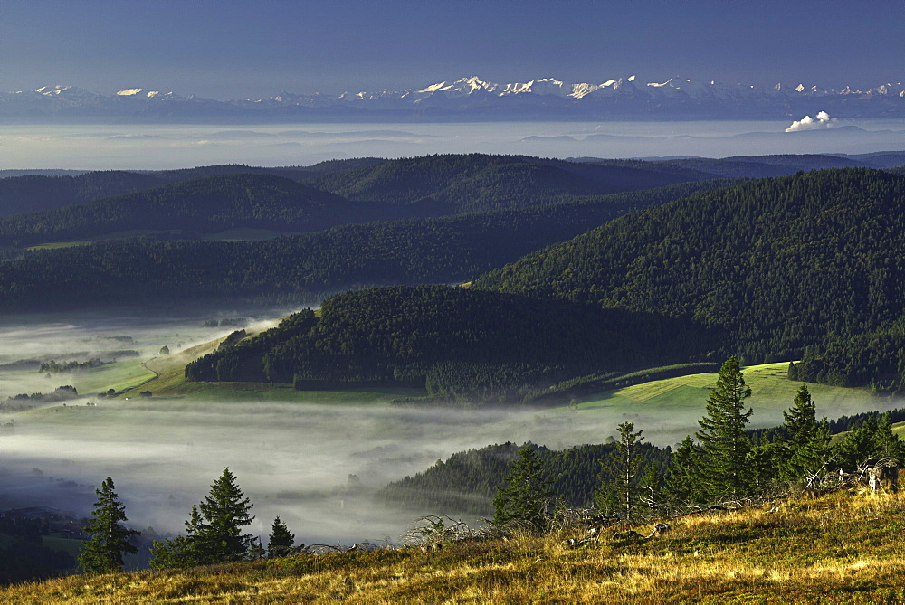 Bernese Alps from the Black Forest, Baden-Wuerttemberg, Germany, Europe
