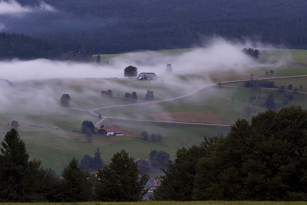 Fog in the Black Forest, Baden-Wuerttemberg, Germany, Europe
