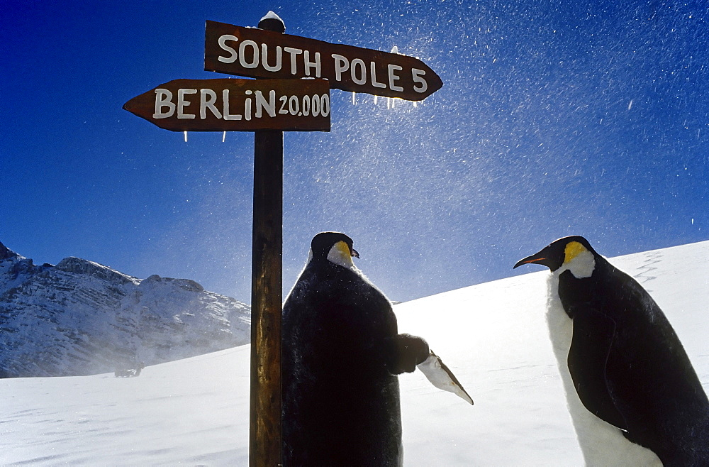 Two artificial penguins at a signpost in snowy mountains, signs pointing toward the South Pole and Berlin