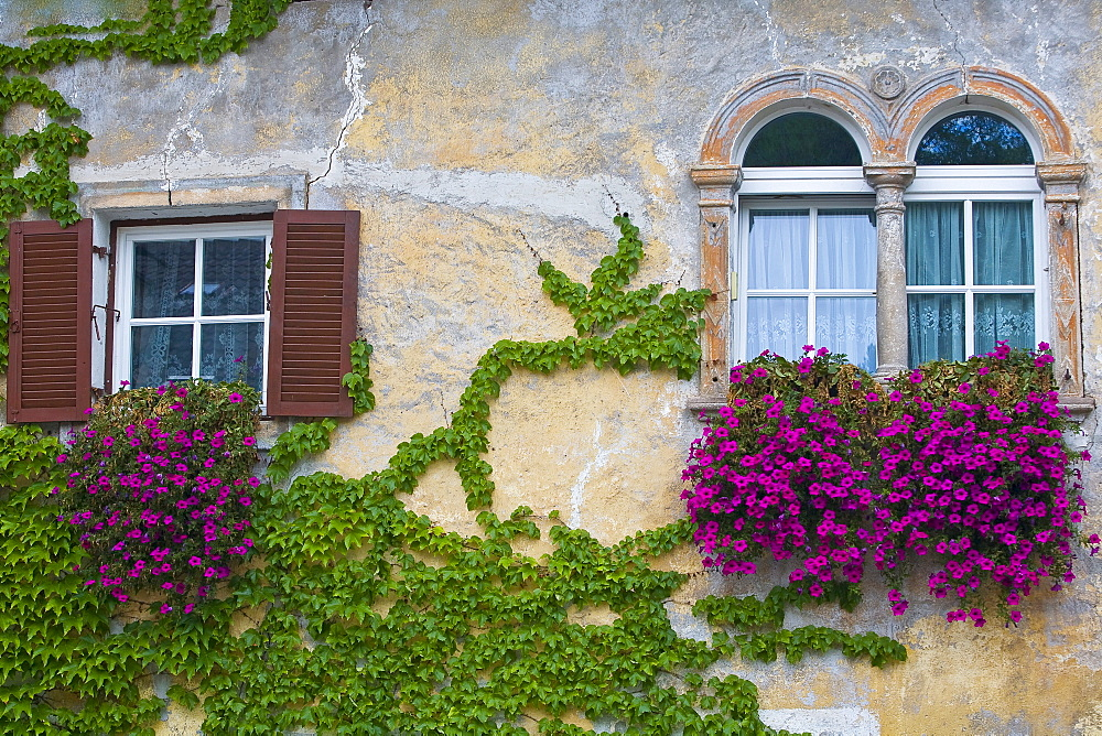 Climbers on a house wall, Kaltern an der Weinstrasse, South Tyrol, Italy, Europe