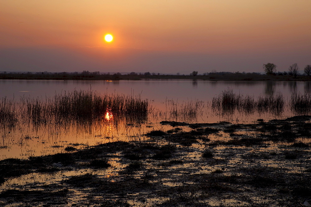 Sunset on the lake, Nationalpark Neusiedlersee national park, Burgenland, Austria, Europe