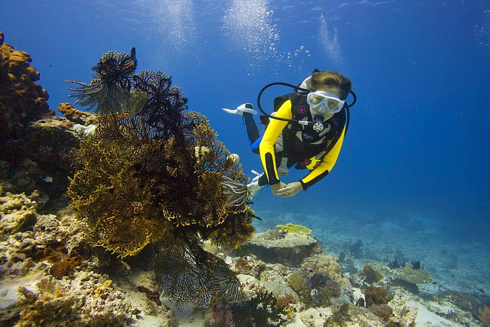 Girl scuba diving behind a Gorgonian, Sea Whip or Sea Fan (Gorgonacea), Indonesia, Southeast Asia