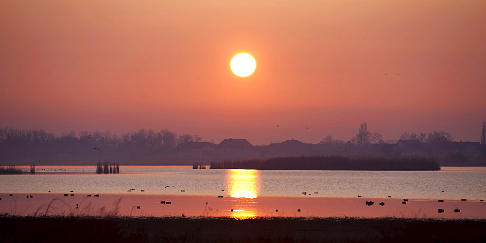 Sunrise in the Lake Neusiedl National Park, Seewinkel near Illmitz, Burgenland, Austria, Europe