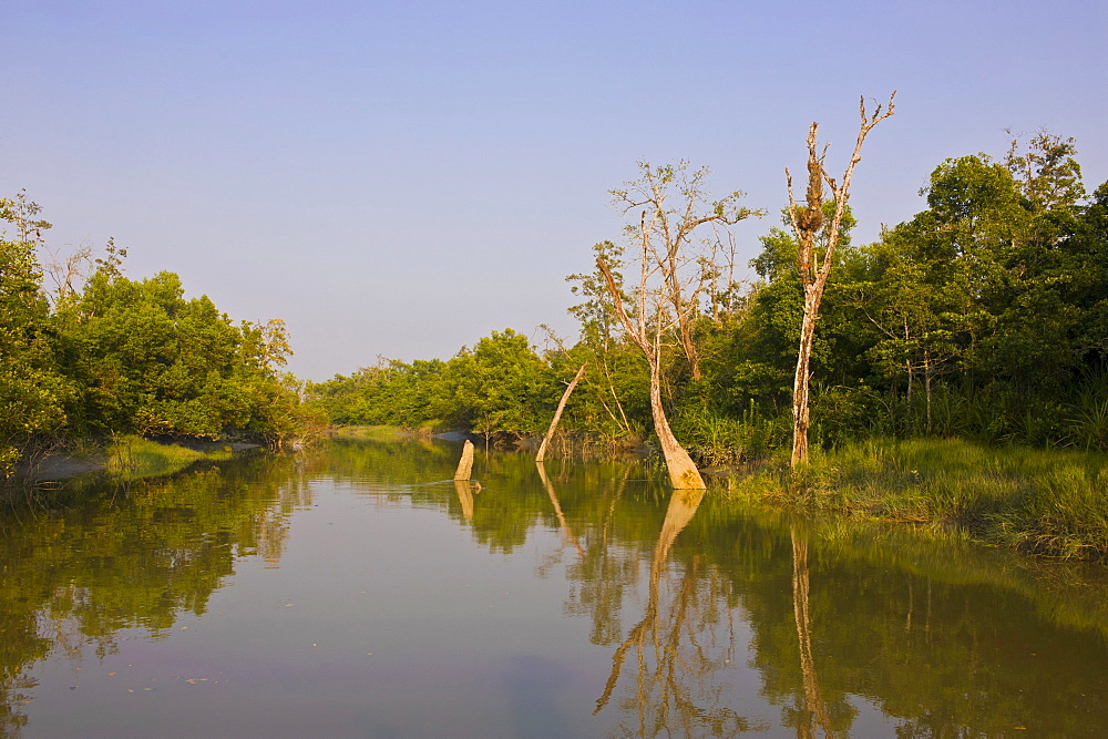 The marshes in the Unesco World Heritage Sundarbans, Bangladesh, Asia