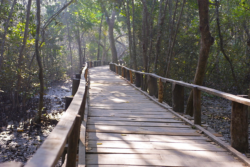 Boardwalk over the marshes of the UNESCO World Natural Heritage Sundarbans, Bangladesh, Asia