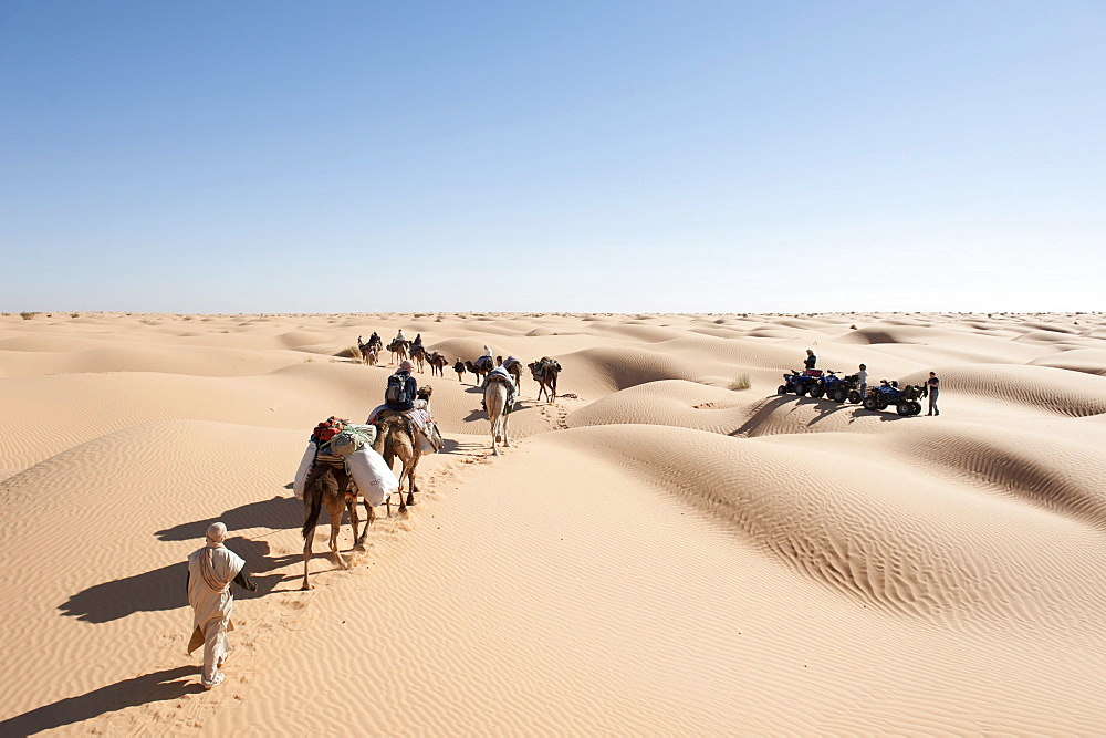 Sustainable tourism, camel trekking, camels, dromedaries (Camelus dromedarius), caravan encountering a group of quads, sand dunes, Sahara desert between Douz and Ksar Ghilane, Southern Tunisia, Tunisia, Maghreb, North Africa, Africa