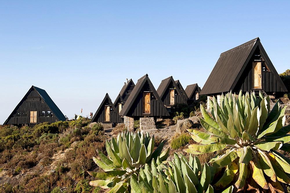 Trekking, Scandinavian-style wooden huts, Horombo Huts, Marangu Route, Giant Groundsel (Dendrosenecio kilimanjari), Mt. Kilimanjaro, Tanzania, East Africa, Africa